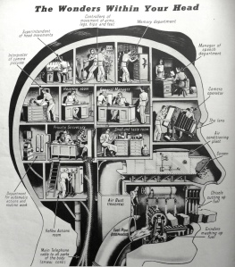 the-wonders-within-your-head-infographic